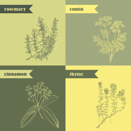 herb medicine: Cooking herbs and spices. Rosemary, thyme, cinnamon, cumin. Retro hand drawn vector illustration