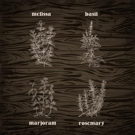 ハーブと木の背景にスパイスを料理します。ローズマリー、マジョラム、バジル、メリッサ。レトロな手書きのベクトル図  イラスト・ベクター素材