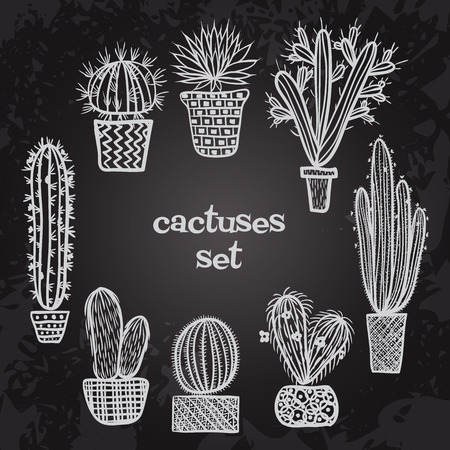 mexico cactus: Flat colorful illustration of succulent plants and cactuses in pots