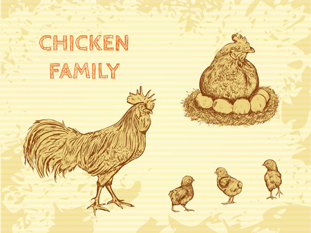 vector illustration  hen: organic farm vintage poster with family chicken: cock, hen with chickens. Hand drawn retro vector illustration in sketch style
