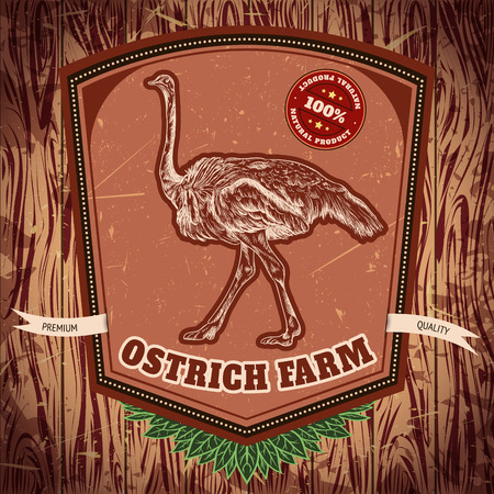 organic background: organic farm vintage label with ostrich on the grunge background. Retro hand drawn vector illustration poster in sketch style Illustration