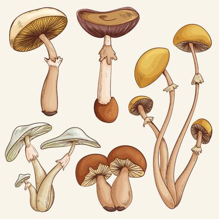 hongo: Set con una gran variedad de setas de colores realistas de la vendimia. Ilustración retro dibujado a mano de vector Vectores