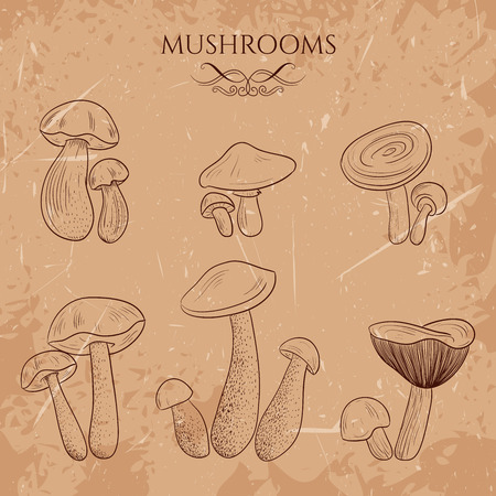 boletus: Set with a variety of vintage mushrooms. Retro hand drawn vector illustration Illustration
