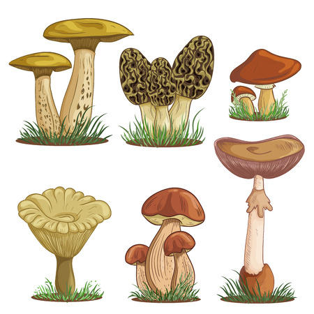boletus: Set with a variety of vintage colorful realistic mushrooms. Retro hand drawn vector illustration
