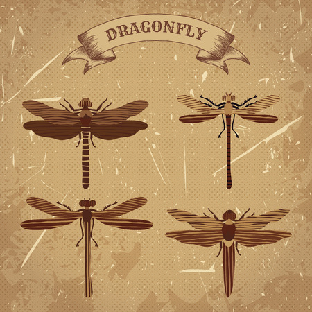 fauna: Vintage poster with flat illustration of dragonfly collection. Retro hand drawn illustration in sketch style with grunge background old paper Illustration