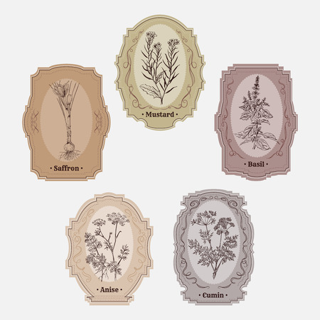 condiments: Collection of vintage storage labels with herbs and spices. Illustration