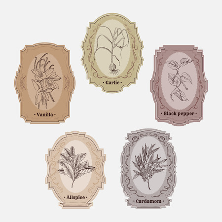 allspice: Collection of vintage storage labels with herbs and spices. Illustration