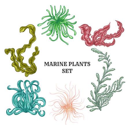 Het verzamelen van mariene planten, bladeren en zeewier. Vintage set van kleurrijke hand getrokken mariene fauna. Stock Illustratie