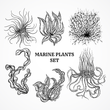 and marine life: Collection of marine plants, leaves and seaweed. Vintage set of black and white hand drawn marine flora. Isolated vector illustration in line art style.Design for summer beach, decorations.