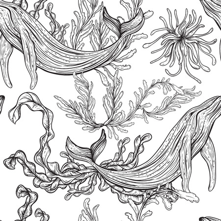 large group of object: Seamless pattern with whale, marine plants and seaweeds.Vintage set of black and white hand drawn marine life.Isolated vector illustration in line art style.Design for summer beach, decorations.
