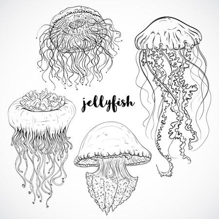 Colección de medusas. Conjunto de la vendimia de la mano en blanco y negro dibuja fauna marina. Ilustración vectorial aislados en la línea arte style.Design de playa de verano, decoraciones. Foto de archivo - 46853251