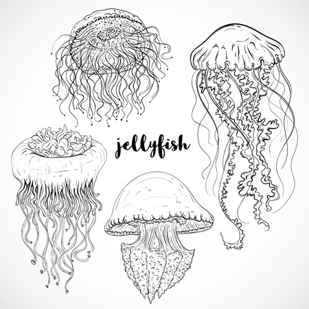 and marine life: Collection of jellyfish. Vintage set of black and white hand drawn marine fauna. Isolated vector illustration in line art style.Design for summer beach, decorations.