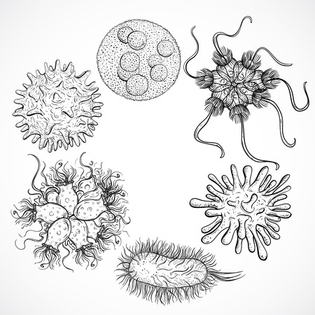 Microbes and viruses. Vintage design set. Black and white realistic isolated hand drawn vector illustration.