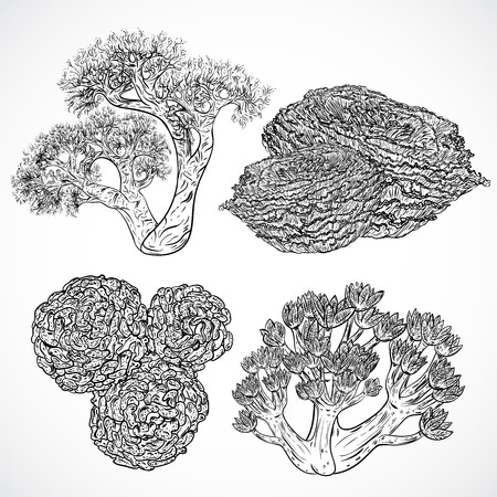 sea weeds: Collection of marine plants and corals. Vintage set of black and white hand drawn marine flora. Isolated vector illustration in line art style.Design for summer beach, decorations.