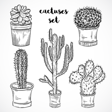 caricatura mexicana: Collection of succulent plants and cactuses in pots. Black and white hand drawn set of botanical florals. Vectores
