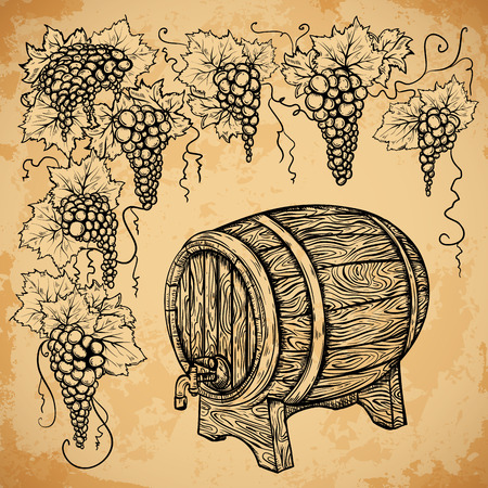 aged paper: Vintage wine barrel and grape on aged paper background. Isolated elements. Retro hand drawn vector illustration