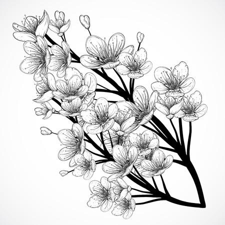 Bloesem van de kersenboom. Vintage zwart-witte hand getrokken illustratie in schets stijl. Geïsoleerde elementen.