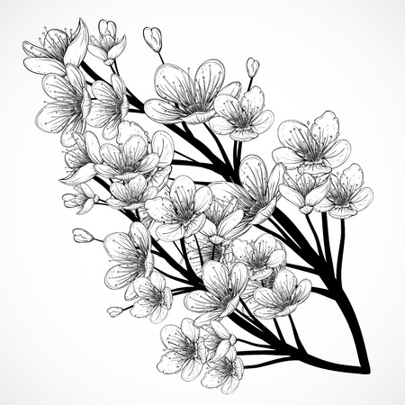 bloom: Cherry tree blossom. Vintage black and white hand drawn illustration in sketch style. Isolated elements.