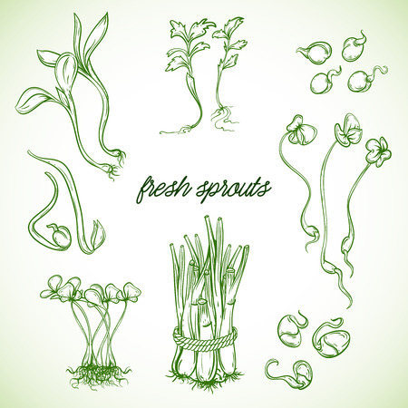 Fresh sprouts plants set. Isolated elements.  Illustration