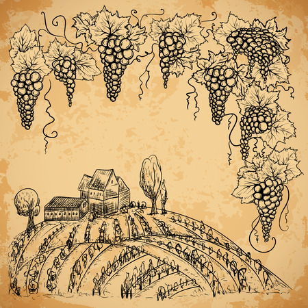 aged paper: Vintage vineyard and grape on aged paper background. Isolated elements. Retro hand drawn vector illustration