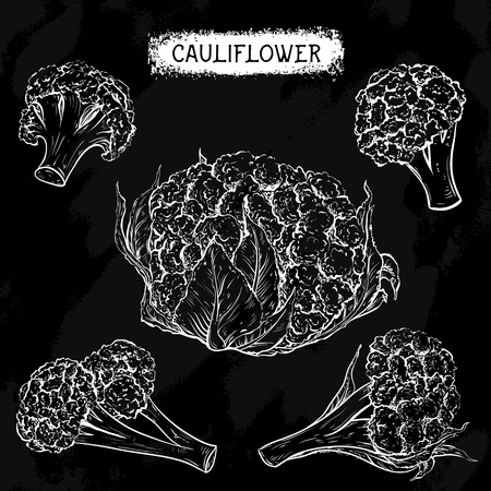 cauliflower: Cauliflower. Vintage collection of cauliflower in different angles on chalkboard. Isolated elements. Black and white hand drawn vector illustration