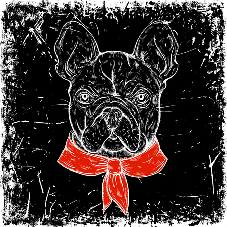 french style: French Bulldog. Vintage black and white hand drawn vector illustration in sketch style on grunge background
