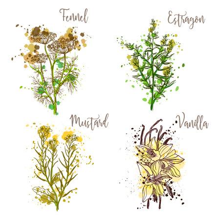 Cooking herbs and spices in watercolor style .Fennel, estragon, mustard, vanilla. Retro hand drawn vector illustration. Retro banner, card, scrap booking, postcard, poster