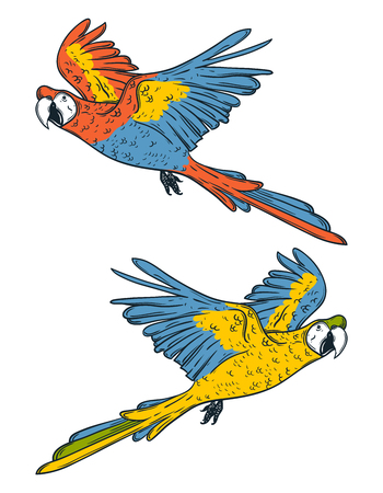 Macaw parrots. Hand drawn vector illustration