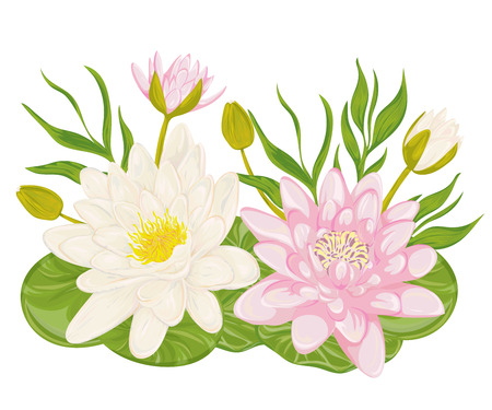 lily flowers collection: Water lily set. Collection decorative design elements for wedding invitations and birthday cards. Flowers, leaves and buds. Vintage hand drawn vector illustration in watercolor style. Illustration