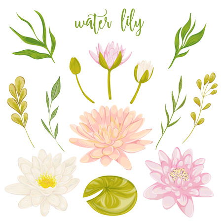 Water lily set. Collection floral decorative design elements for wedding invitations and birthday cards. Flowers, leaves and buds. Vintage hand drawn vector illustration in watercolor style.