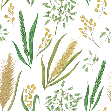 Seamless pattern with cereals. Barley, wheat, rye, rice and oat. Collection decorative floral design elements. Isolated elements. Vintage vector illustration in watercolor style. Ilustracja