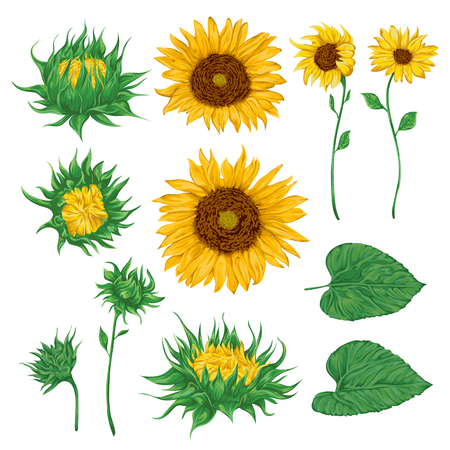 68896601-stock-vector-sunflowers-set-collection-decorative-floral-design-elements-for-wedding-invitations-and-birthday-car.jpg?ver=6