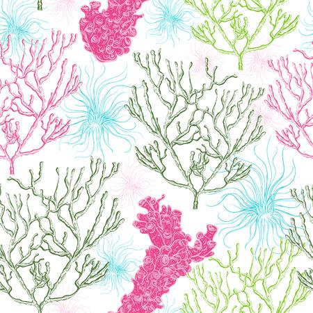 海藻、サンゴ、海藻のコレクションです。