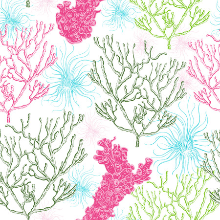 Collection of marine plants, corals and seaweed.