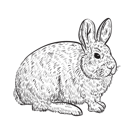 Snowy arctic hare. Vintage vector illustration in sketch style