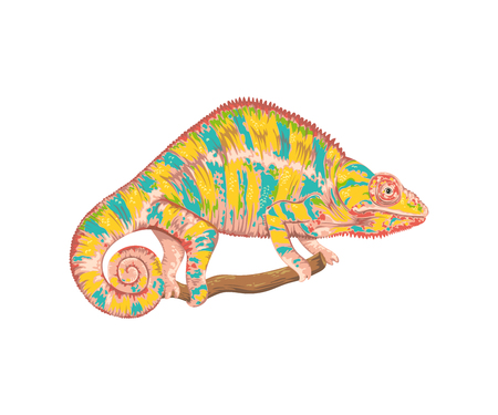 Chameleon. Isolated on white background. Vector illustration in watercolor style