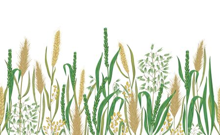 Seamless border with cereals. Barley, wheat, rye, rice and oat. Collection decorative floral design elements. Vintage vector illustration in watercolor style.