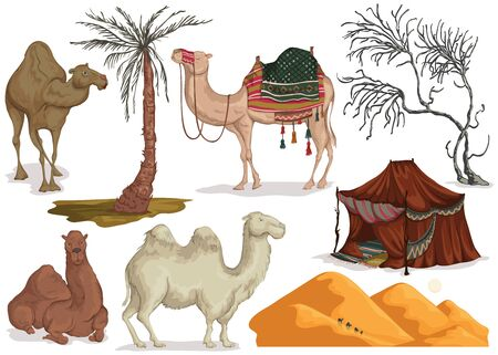 Camels in different poses, sand dune of desert, nomad tent, dried and palm tree. Collection scenery design elements. Isolated objects on white background. Vector illustration Illustration