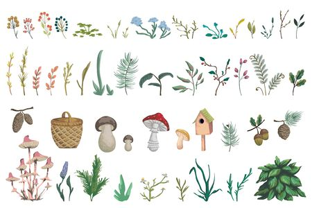 Forest plants, berries, flowers, mushrooms, plant, berry, cones. Decorative design elements of forest flora in watercolor style. Isolated objects on white background. Vector illustration