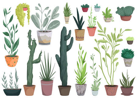 Houseplants in pots set. Collection of beautiful natural home decorations. Greenhouse or home garden with plants and cacti growing in pots. Isolated objects on white background. Vector illustration 矢量图像