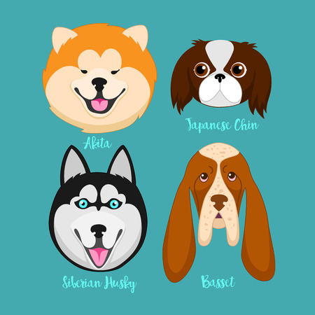 CHIN: Different breeds of dogs.Akita,Siberian Husky,Japanese Chin,basset.Dog characters. Cartoon vector illustration.Set of 4 stickers different breeds dogs, handmade. Head dog. Icons with dogs.