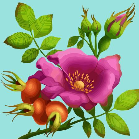 wild rose: Bright wild rose on a blue background