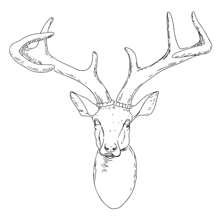 whitetail deer: Deer Mascot Head.Deer Head Animal Symbol.Engrave isolated vector.Hand Drawn Graphic.Isolated on white background.Great for Badge Label Sign Icon Logo Design.Quality Emblem.