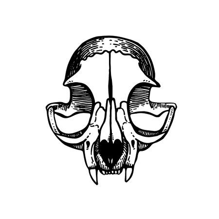 Skull of a cat. Cat silhouette. Tattoo, symbol line art drawing. Boho print, poster, t-shirt. textiles. Vector illustration art. Vintage engraving. Vintage style. Traditional art tattoos Blackwork