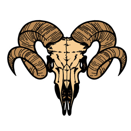 Skull of a sheep. Horns silhouette. Vector illustration art.
