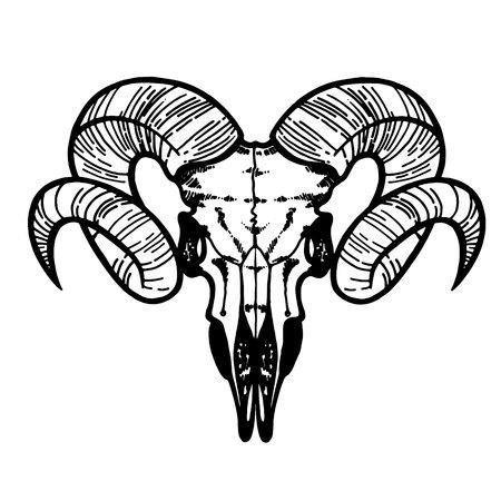 Skull of a sheep. Horns silhouette. Tattoo, symbol line art drawing. Boho print, poster, t-shirt. textiles. Vector illustration art. Vintage engraving. Vintage silhouette. Traditional art tattoos 向量圖像