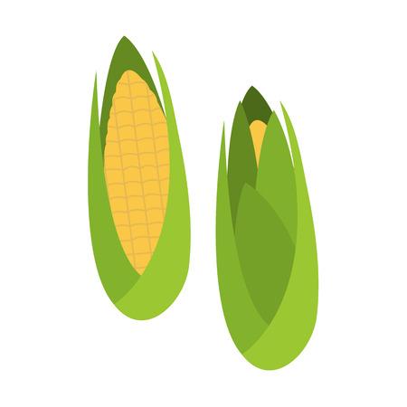 flat organic corns isolated on white background