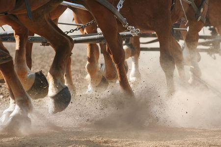 Hoof Dust - The feet of horses pulling a wagon through dirt. Stock Photo