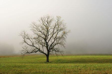 霧のフィールド - Cades コーブ、スモーキー山脈国立公園米国で孤独な木。 写真素材 - 2269026