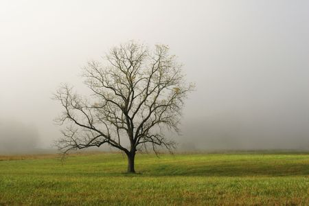 Lone Tree in Foggy Field - Cades Cove, Smoky Mountains National Park, USA.